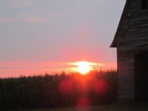 cornfields and sunsets in Iowa