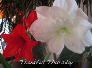 Thankful Thursday - December 12, 2013